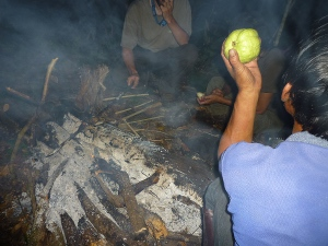 Jungle cooking photo