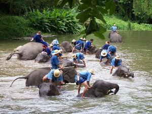 Elephant bathing photo