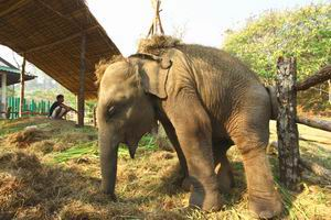 Thai elephant art photo